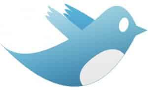Twitter Bird Photo