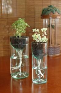 Self-Watering Herb Wine Bottles