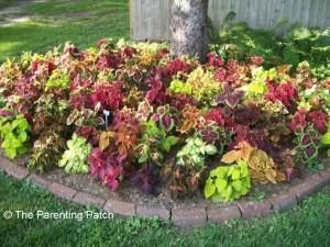 Planting Flowers Around Trees