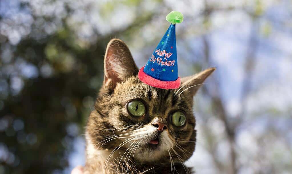 lil bub celebrates her 2nd birthday scores online tv deal