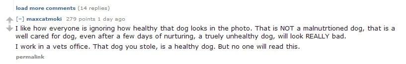 stolen dog heidi