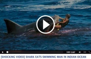 fake shark attack video