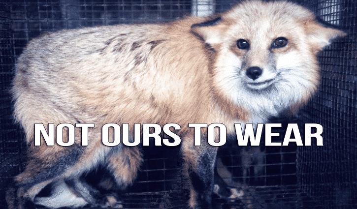 Featured image for PETA Hated Joe Namath's Massive Fur Coat