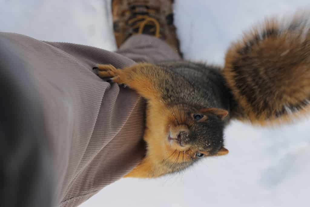 Featured image for Indiana University Squirrels Take Over Twitter Account For April Fools' Day