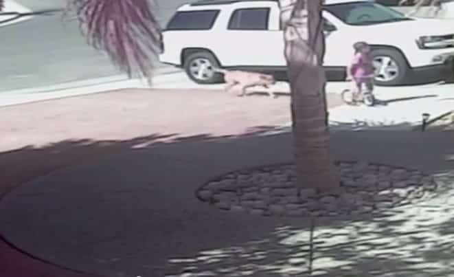 Featured image for Family Cat Saves Small Boy From Dog Attack In Driveway [Video]