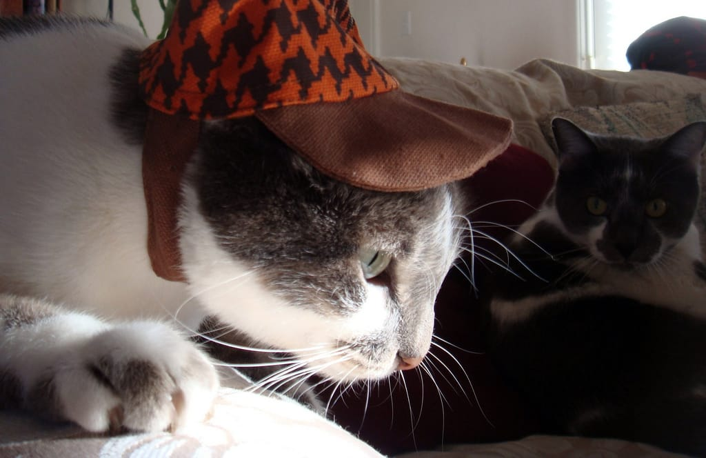 Featured image for #HatzOnCatz Photos Are Ridiculously Cute