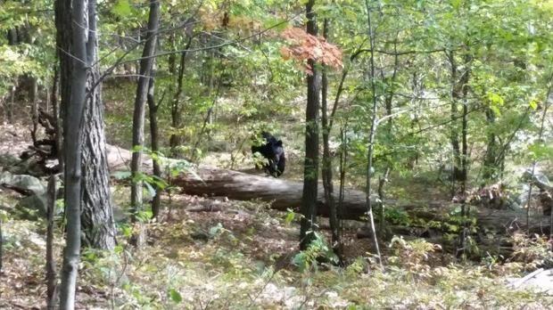 hiker photographs bear