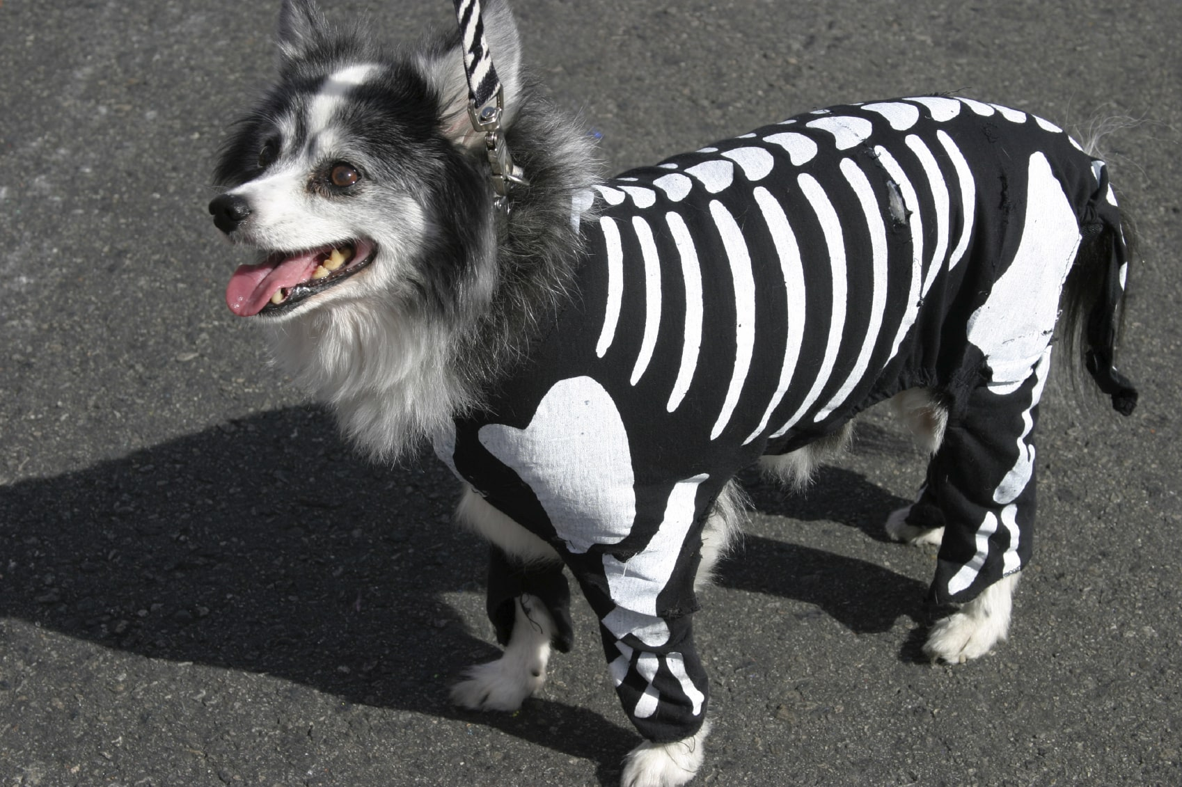Top 5 Adorable Pet Costumes this Year's Halloween