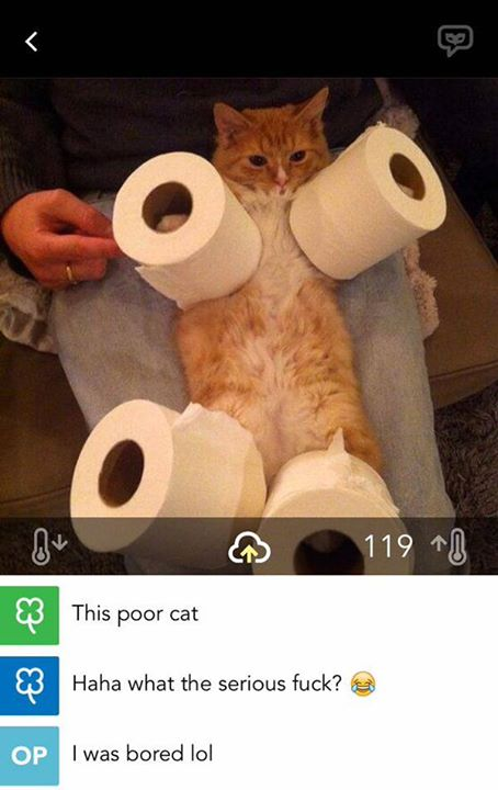 unseen cat