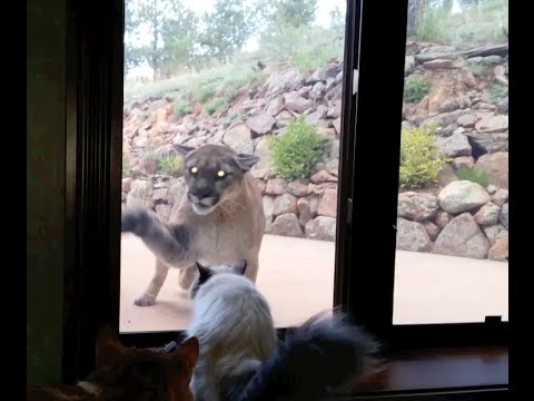 Dog Chases Cat Into Glass Door Gif