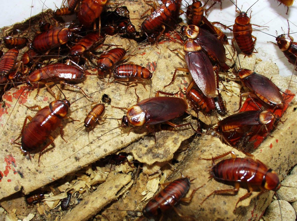 How-to-Get-Rid-of-Cockroach-Infestations
