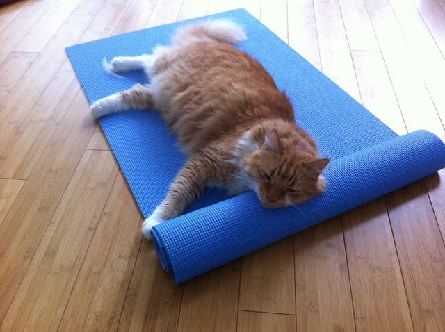 This Yoga Studio Wants To Make Quot Yoga With Cats Quot A Thing