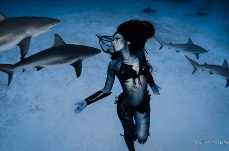Featured image for Diver Dances With Sharks To Protest Shark Killings [Video]