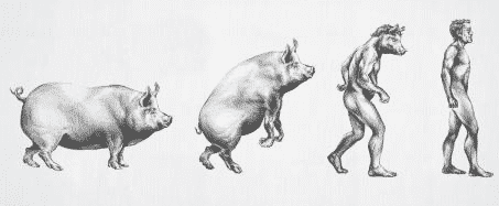 The Fascinating Future Of Human Pig Hybrids