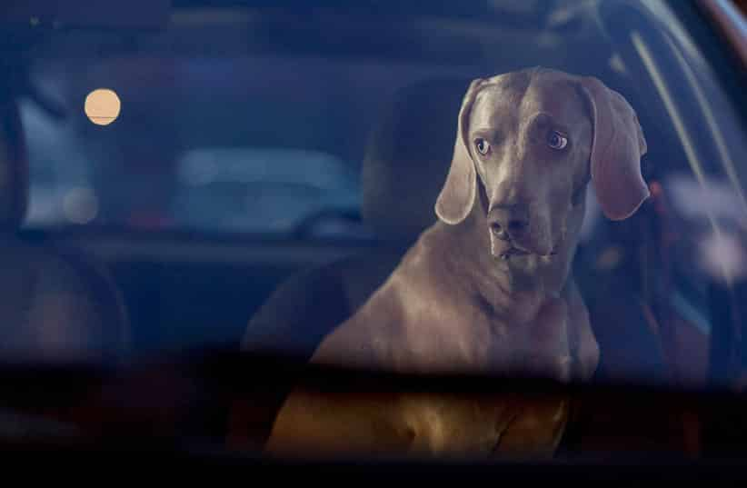 Featured image for This State Wants to Make Abandoning Your Pet in a Car a Felony
