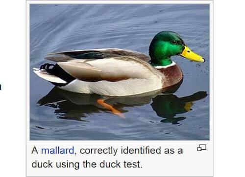 wiki-caption-duck