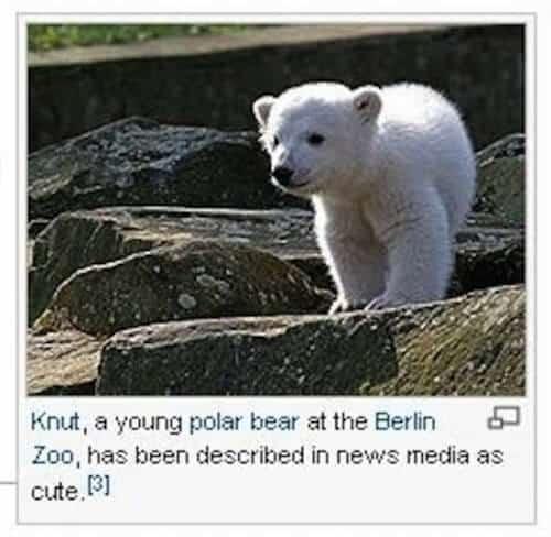 wiki-caption-knut