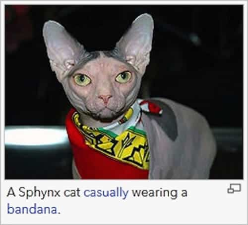 wiki-caption-sphynx
