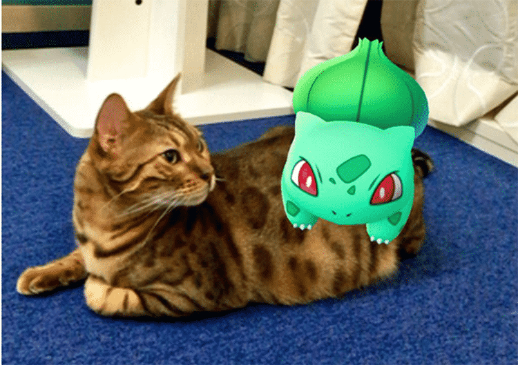 Featured image for Can Real-Life Pets Actually See Pokemon? [Pokemon GO]