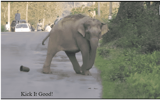 Featured image for Elephant Blocks Traffic So It Can Master Its Soccer Skills
