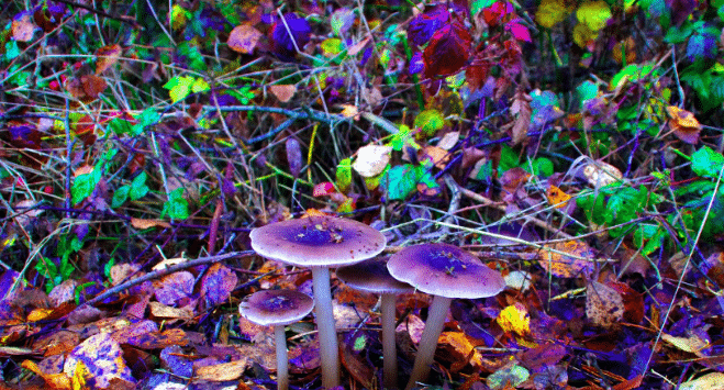 Featured image for Mushrooms Are Now Considered the Safest Recreational Drug