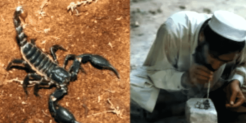 Featured image for Smoking Scorpions to Get High is All The Rage in Pakistan Right Now