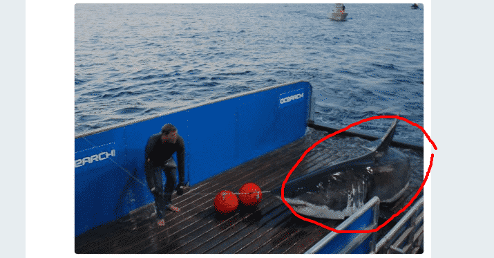 Featured image for WTF of the Day: Twitter's Most Famous Shark Has Gone Missing