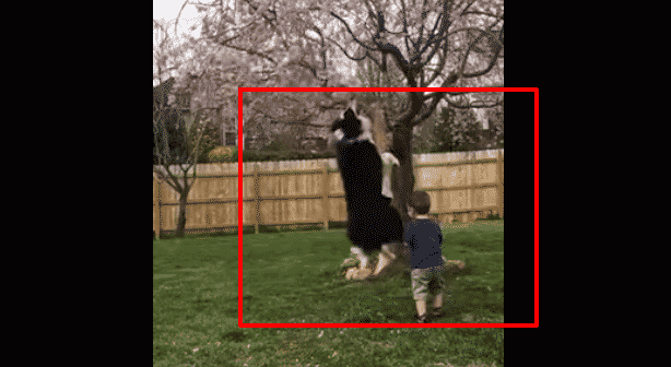 Featured image for Cute Dog Jump Kicks A Kid in the Head and It's the Best Thing Ever