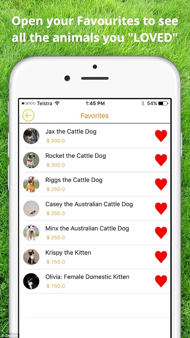 This Tinder For Cats and Dogs is Far Better Than Dick Pics, Zeppee App