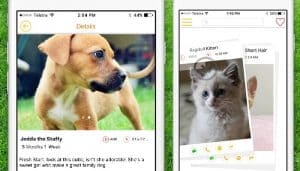 This Tinder For Cats and Dogs is Far