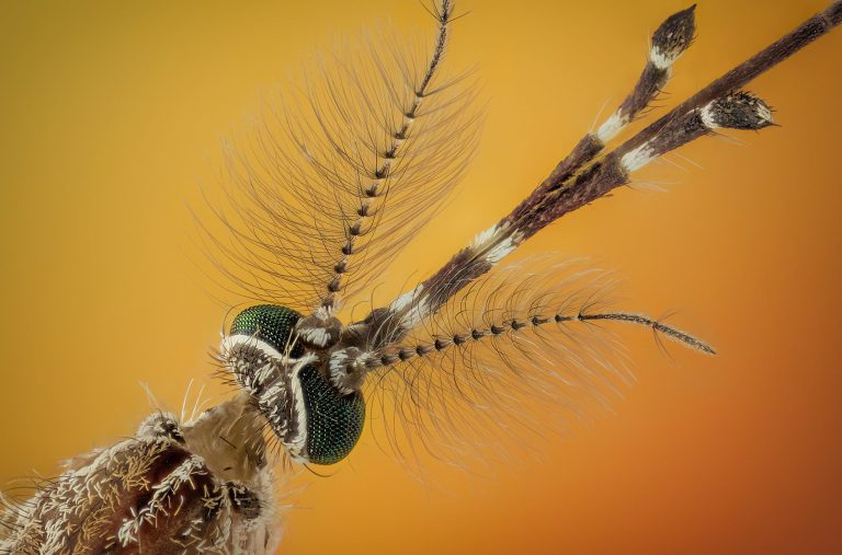 These Close-Up Shots of Spiders and Other Insects Will Give You Serious Nightmares