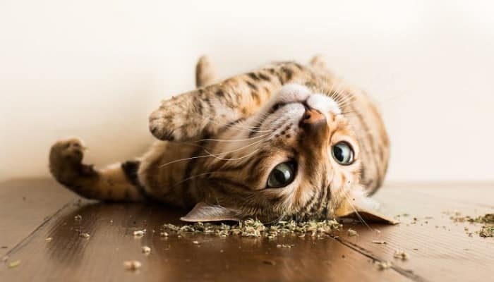 This Delightful Photo Series Captures Kitties High on Catnip