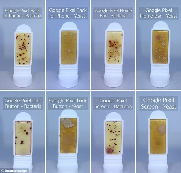 Shocking Images Show How Much Bacteria is Really On Your Smart Phone