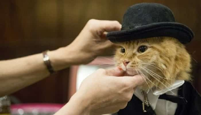 Featured image for Watch These Feline Fashionistas Conquer the Cat Walk for Charity