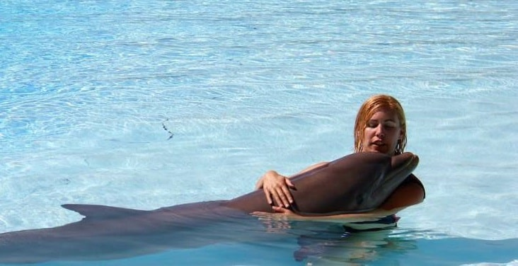 Featured image for Horny Dolphin Causes Swimming Ban Off The West Coast Of France