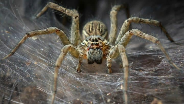 Featured image for Man Reports Buzzing In His Ears To Doctor; Finds Spider With Nest Inside