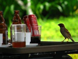 Drunk birds