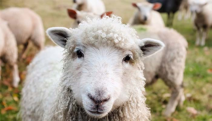 "Featured image for PETA Demands English Village Called Wool Change it's Name Because it Advocates ""Animal Cruelty"""
