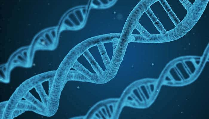 Singletons Will Be Matched on Their DNA By 2025, Say Researchers