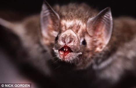 killing bats