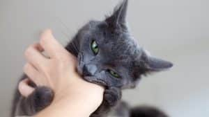 cats bite