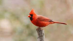 Incredibly Rare Half-Male, Half-Female Bird Spotted in Pennsylvania