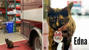 """Beloved """"Fire Cat"""" Thrown Out of Her Station Due to """"Malicious"""" Complaint"""