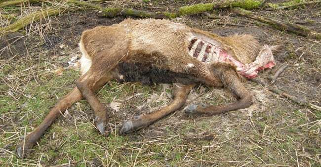 fight zombie deer disease