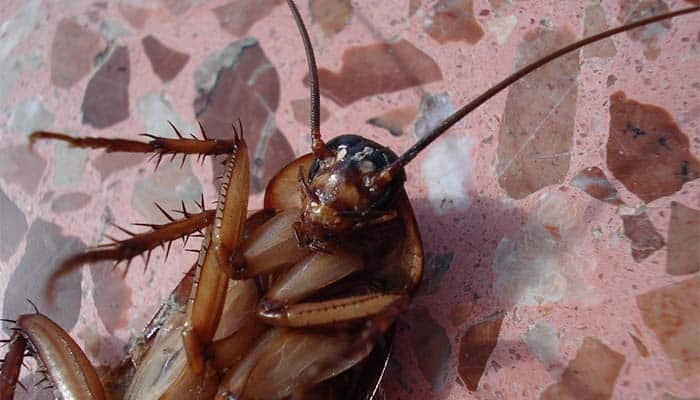 Man Accidentally Shoots Himself Trying to Kill Cockroach