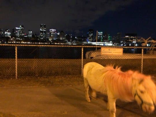 """Canadians Are on the Hunt For a """"Tiny Pink Horse"""" Only Seen at Night"""