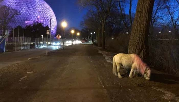 "Canadians Are on the Hunt For a ""Tiny Pink Horse"" Only Seen at Night"