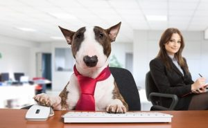 bring your dog to work