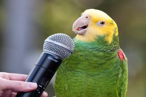parrot words
