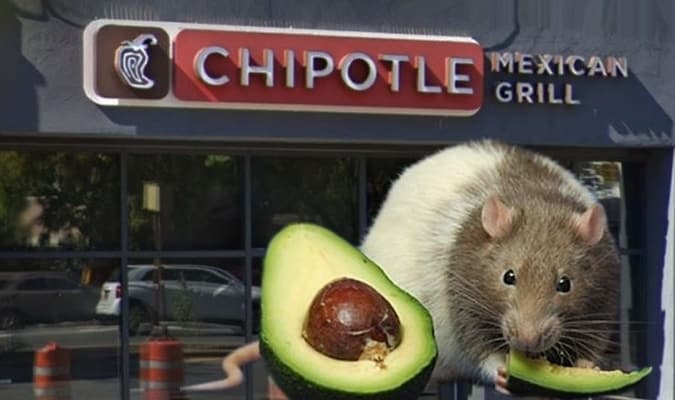 Chipotle rats